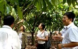 adopting technologies and new ways to develop vietnams cocoa plant