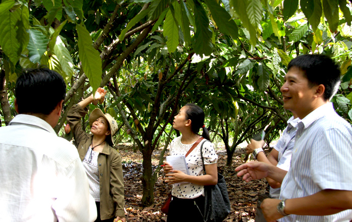 Adopting technologies and new ways to develop Vietnam's cocoa plant