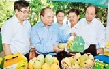 pm hails effective agricultural restructuring of dong thap