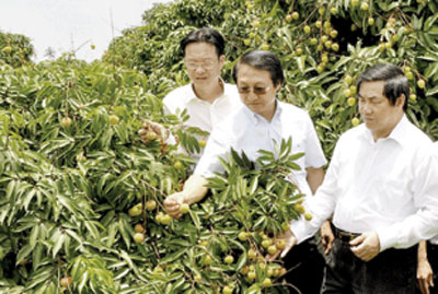 Hai Duong searching for agricultural export market
