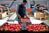 russia extends ban on certain food imports from the eu