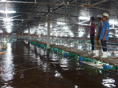 Hi-tech shrimp farming in Binh Dinh