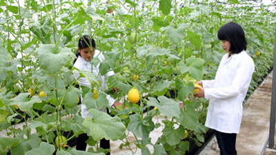 WB to provide 315 million USD for Vietnam's agriculture, education