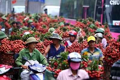 Irradiation to boost VN fruit exports