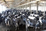 th true milk seeks investment opportunities in russia