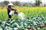 agriculture regains growth momentum