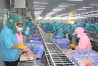 tra fish exports reach 616 million usd in first six months
