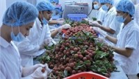 agricultural exports steadily overcome difficulties