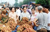 bac giang promotes litchi exports
