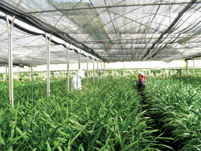 Small firms boldly invest in hi-tech agriculture