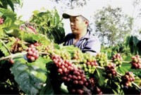 expanding fair trade certification