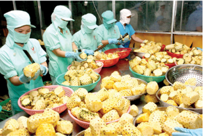 Fruit-vegetable exports to benefit from TPP