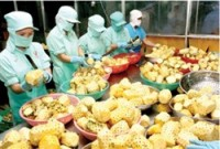 fruit vegetable exports to benefit from tpp