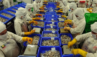 Shrimp exports to US likely to increase in last months of 2015