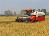 sbv urges credit lending for agriculture loss reduction