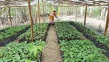 singapore indonesia boost agricultural cooperation