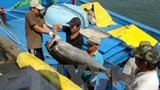 japan to build tuna processing plant in phu yen