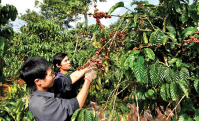 Coffee companies face internal challenges