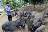 binh dinh spends big on animal breeding