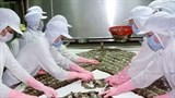 shrimp farmers should increase product quality experts
