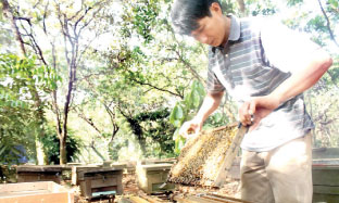 Opportunities for honey exports