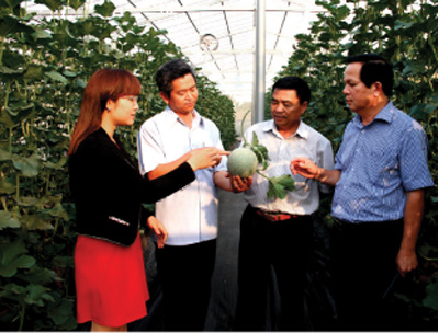 Hi-tech agriculture seeds in Central Highlands