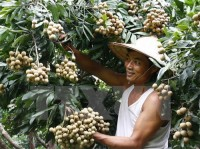 conference promotes hung yen longan fruit