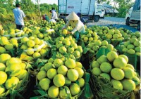 high transport costs affect southern fruit sales
