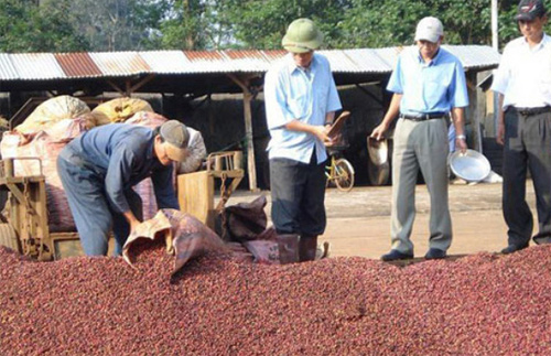 Coffee exports expected to earn US$3 billion
