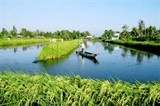 ca mau to expand vietgap mixed rice prawn farming areas