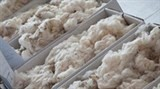 australia vietnam increase cooperation in wool sector