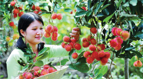 Mekong Delta's fruits: Linkages foster sustainable development