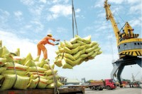 rice exports show positive signs