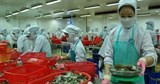 vietnamese shrimp exports to uk rise
