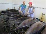 tuna exports to canada rise 60 percent