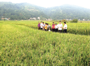 HIGH-QUALITY RICE BRANDING: A clear trend in the north