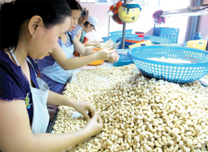 Cashew exports accelerate