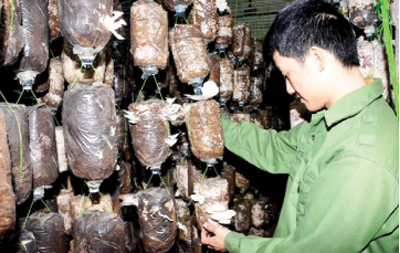 Quang Ninh: Industrial promotion helps new product development