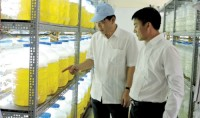 developing the shrimp sector overcoming breeding problems