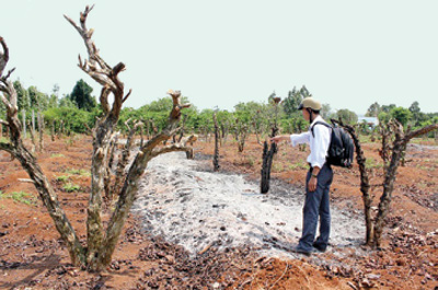Coffee farmers worry about crop failure