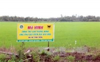 mekong delta adopts smart rice cultivation model