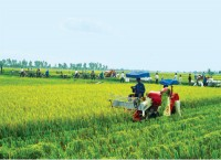 corporate capital shortages in agricultural restructuring