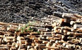 chile plans timber exports to viet nam
