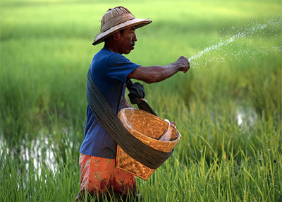 Myanmar: Rice export drops in first half of fiscal 2015