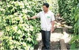 pepper exports to reach annual target soon