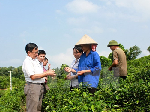 New-style cooperatives - key to Vietnam's agricultural restructuring