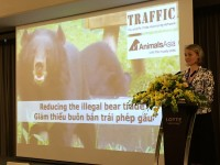 viet nams illegal bear trade persisting more than a decade after ban imposed