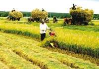 agricultural mechanization needs acceleration