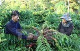 agro fishery forestry exports may meet yearly target