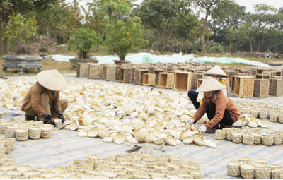 Phu Xuyen develops craft villages